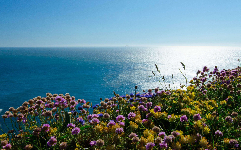 Картинка с морем и цветами