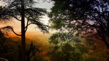 Картинка природа пейзажи кроны