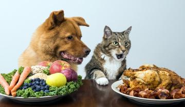 обоя юмор и приколы, кошка, собака, мясо, фрукты