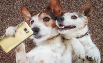 обоя юмор и приколы, собаки, парочка, селфи, смартфон, настроение, ситуация