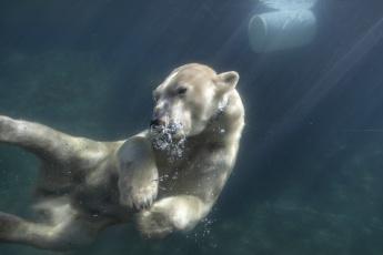 обоя животные, медведи, медведь, вода