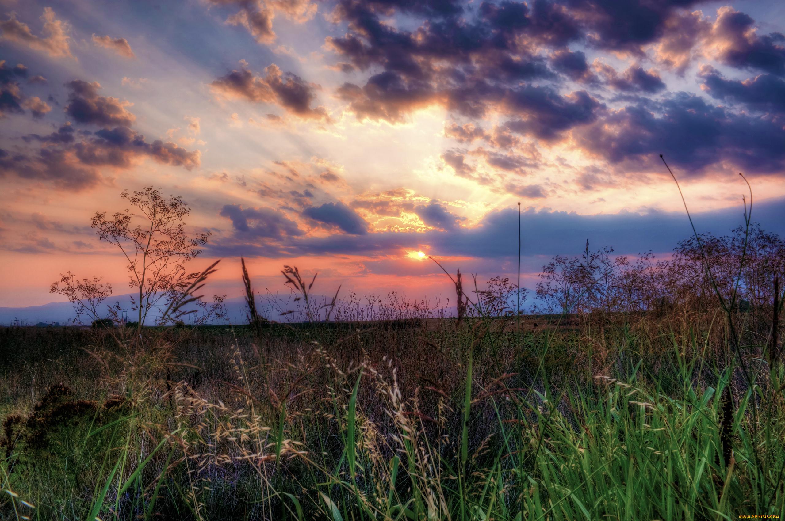 закат небо полевые растения  № 963461 бесплатно