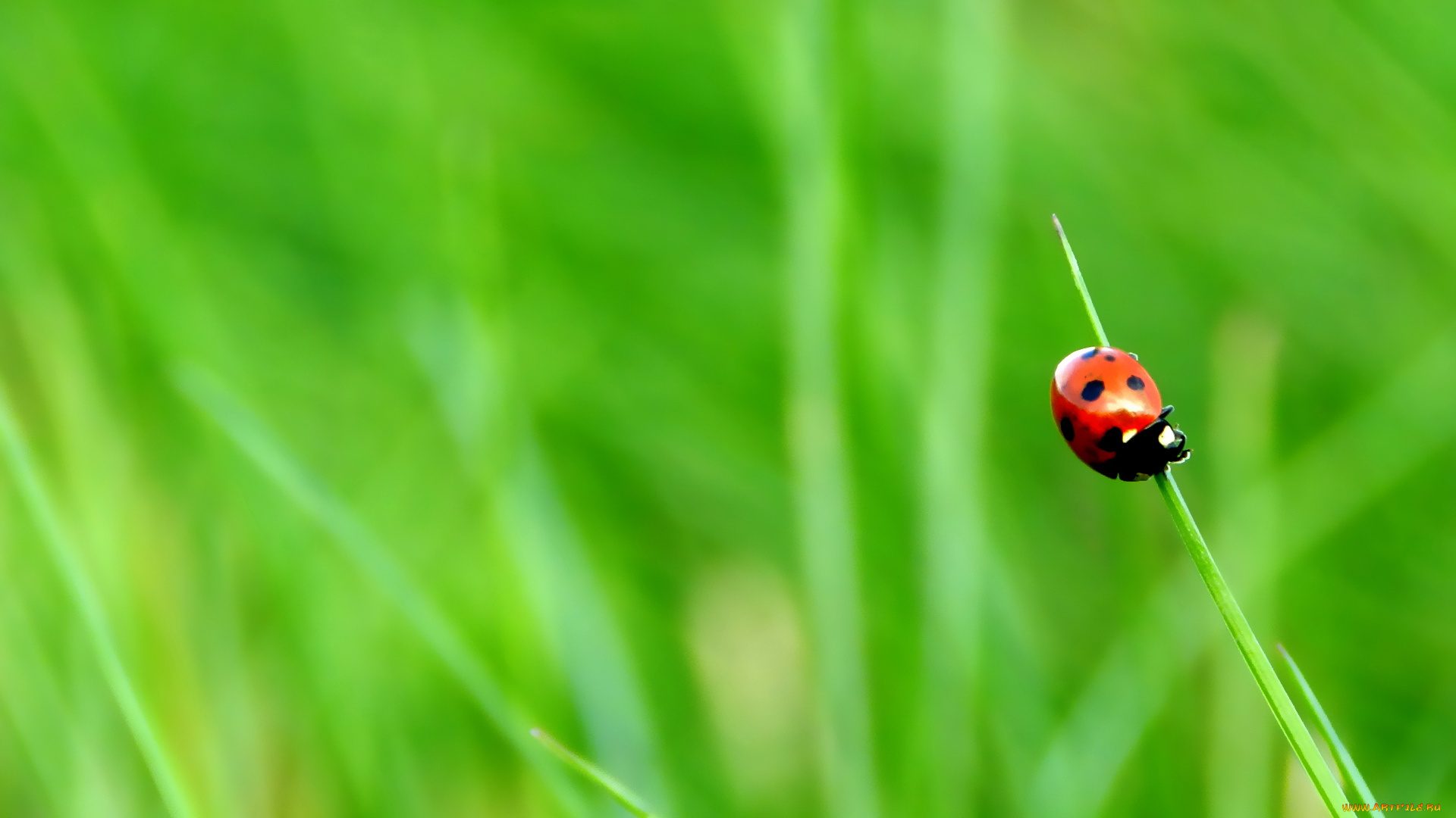 природа божья коровка трава на телефон