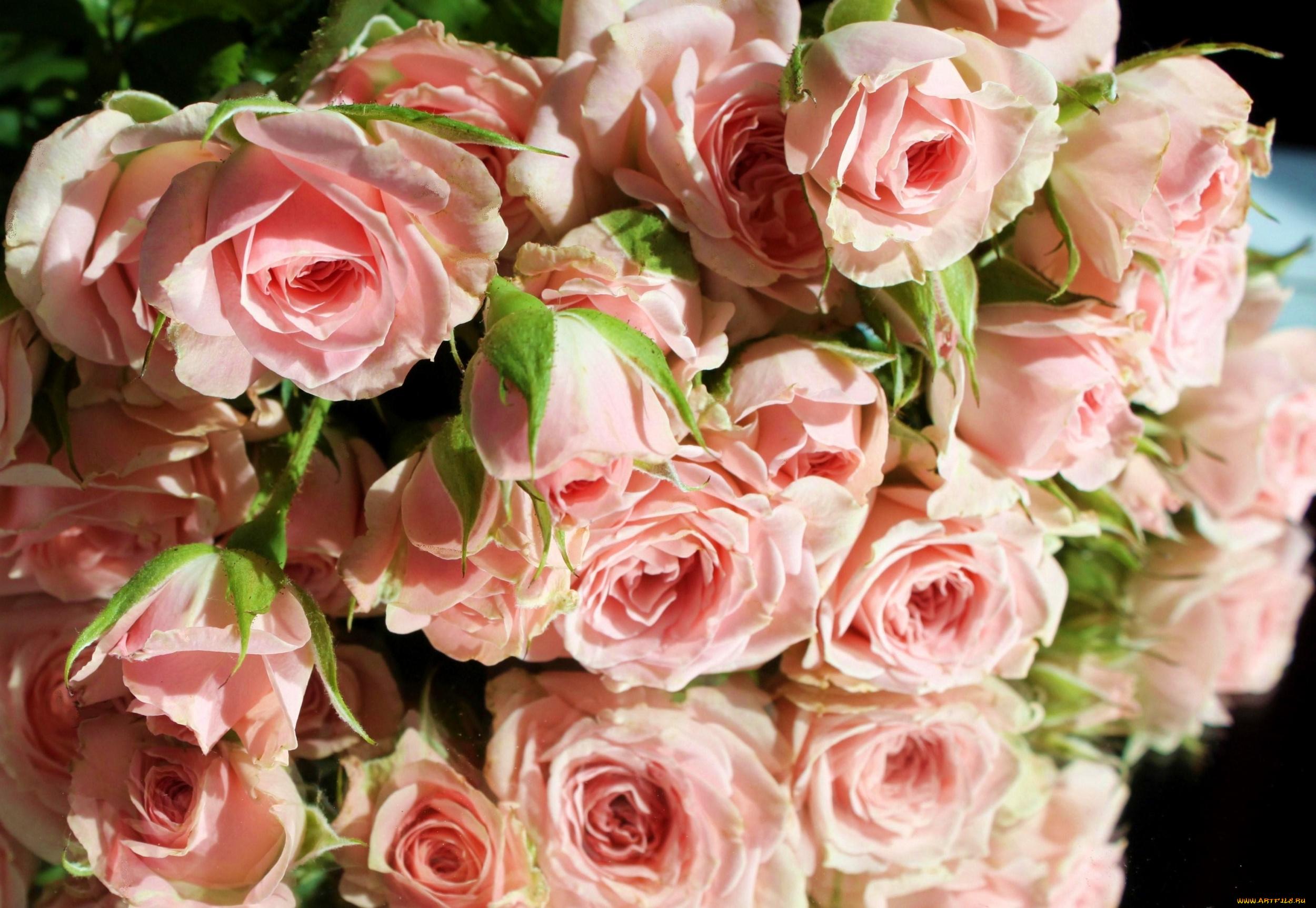 Открытки, розы розовые картинки охапка