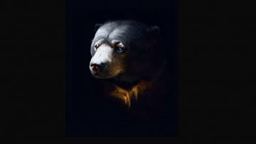 обоя рисованное, животные,  медведи, черный, фон