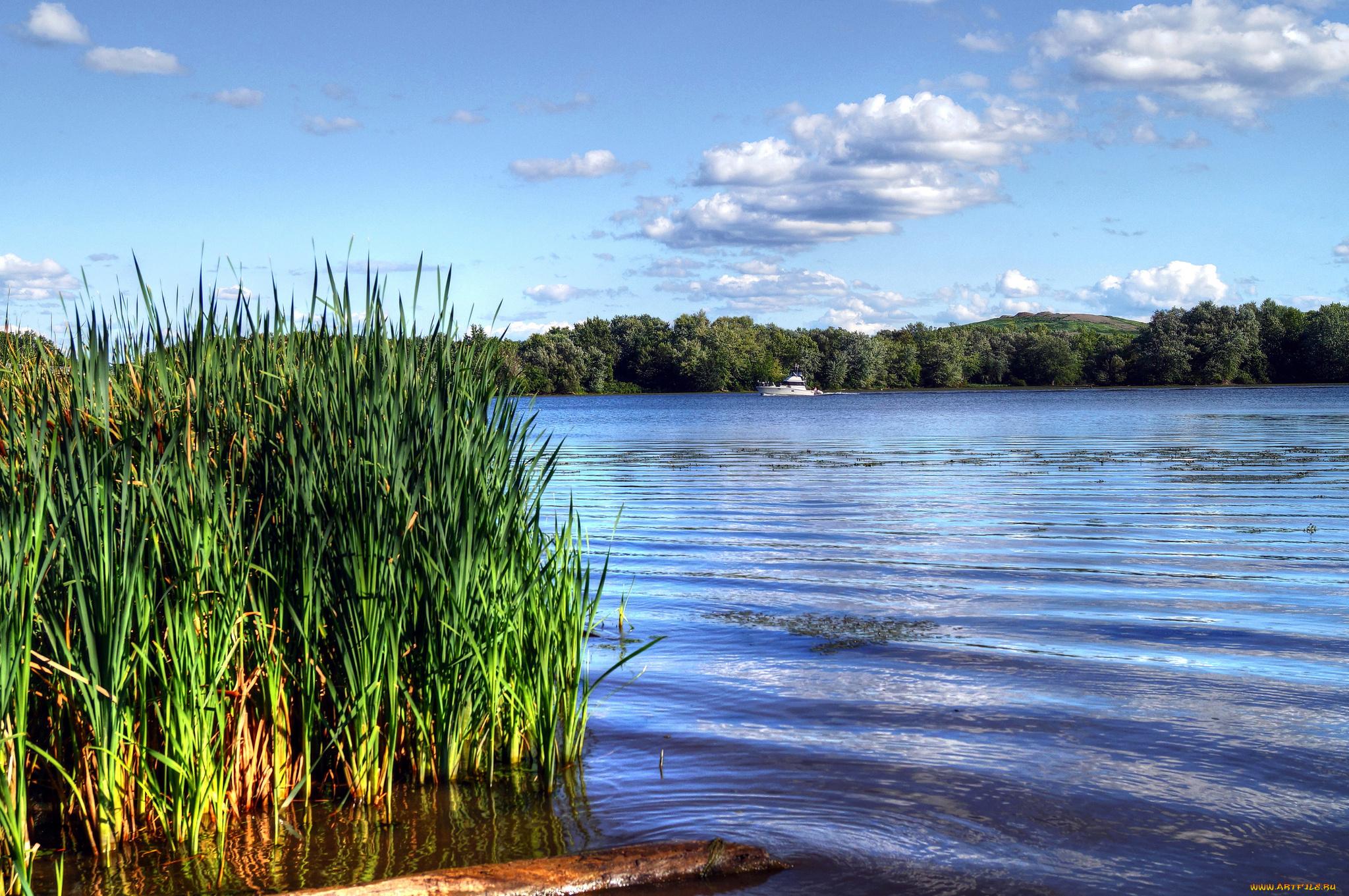 Мальчика открытка, картинки с камышами на озере