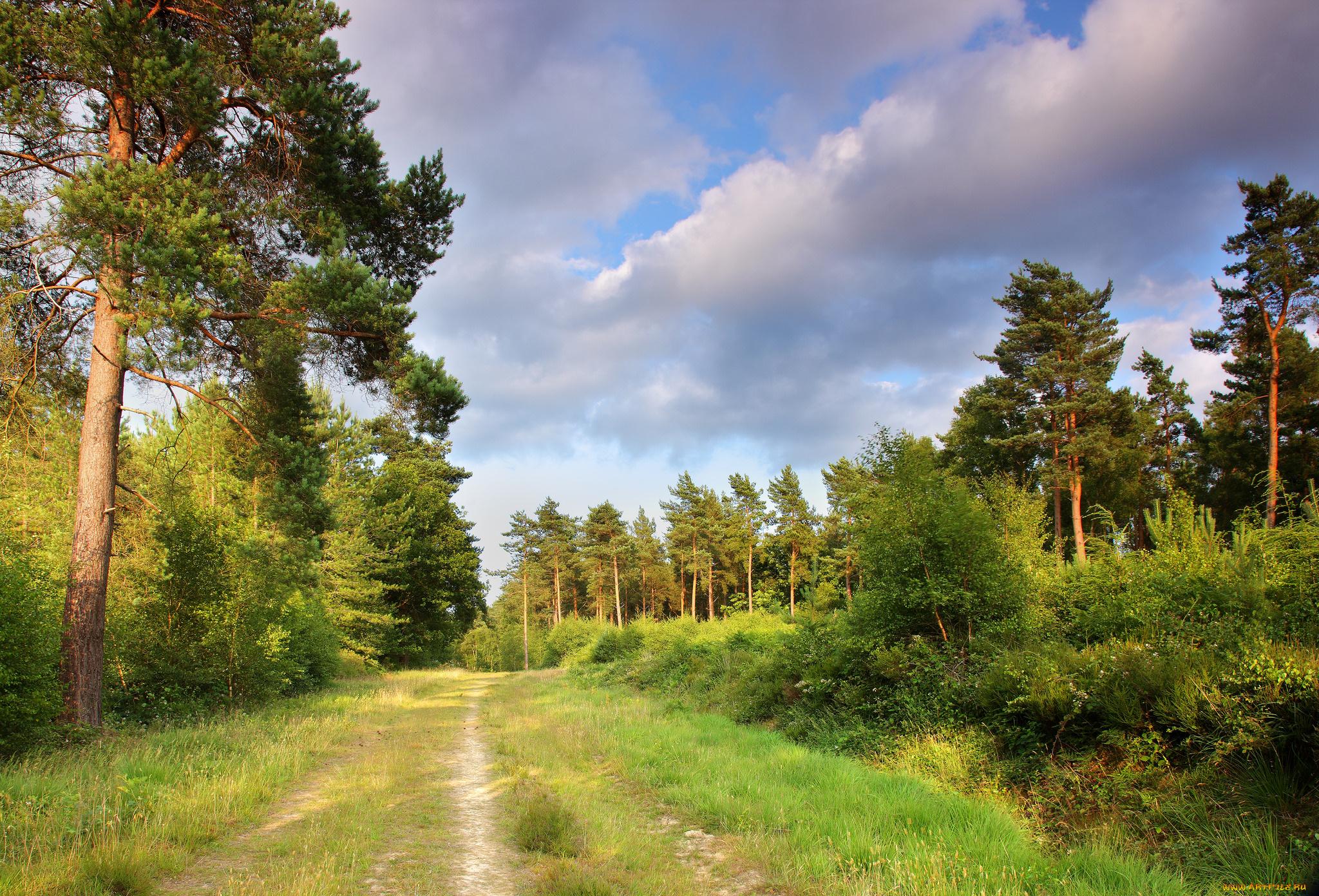 на опушке соснового леса фото является крупнейшим