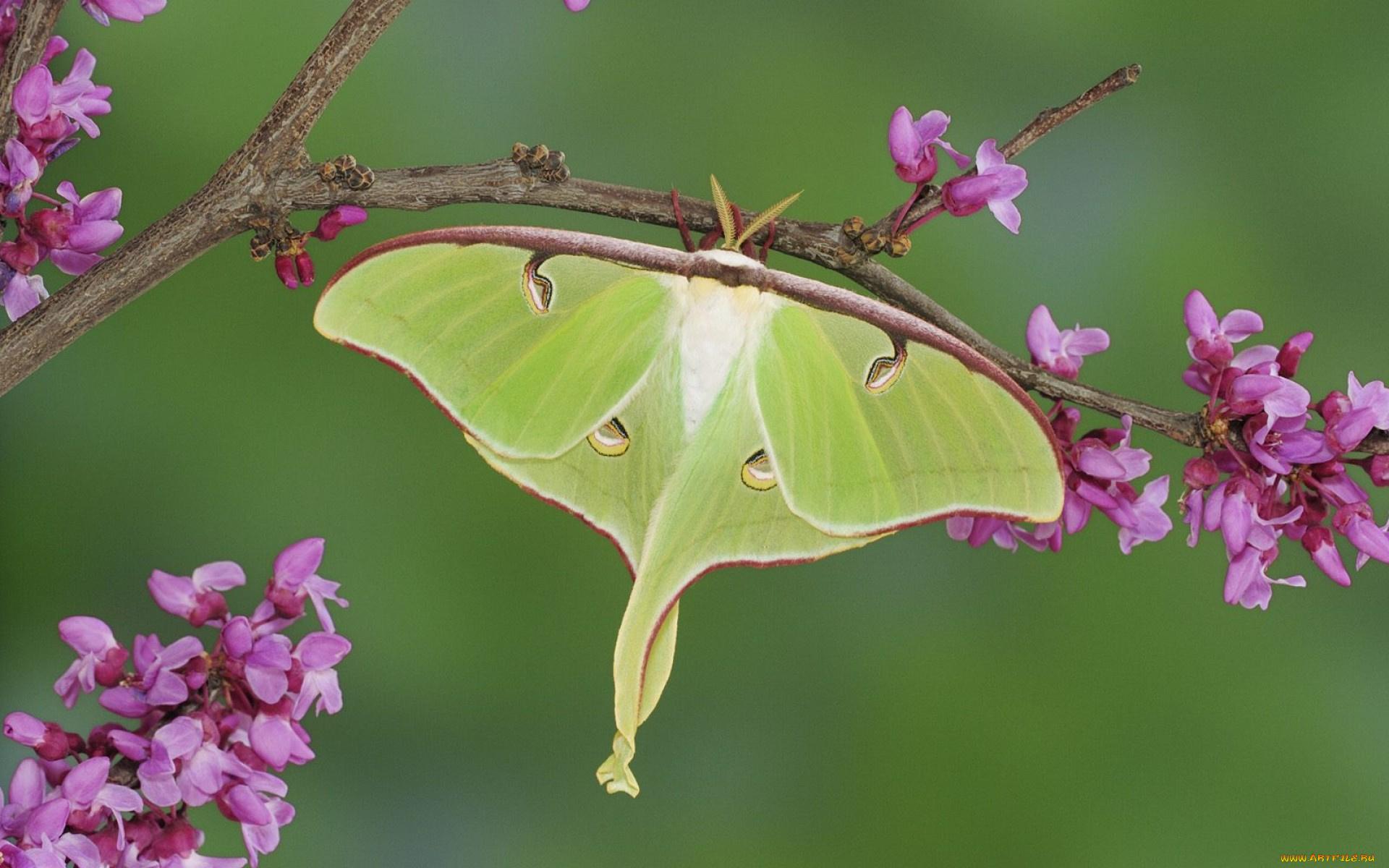Бабочки на земле бесплатно