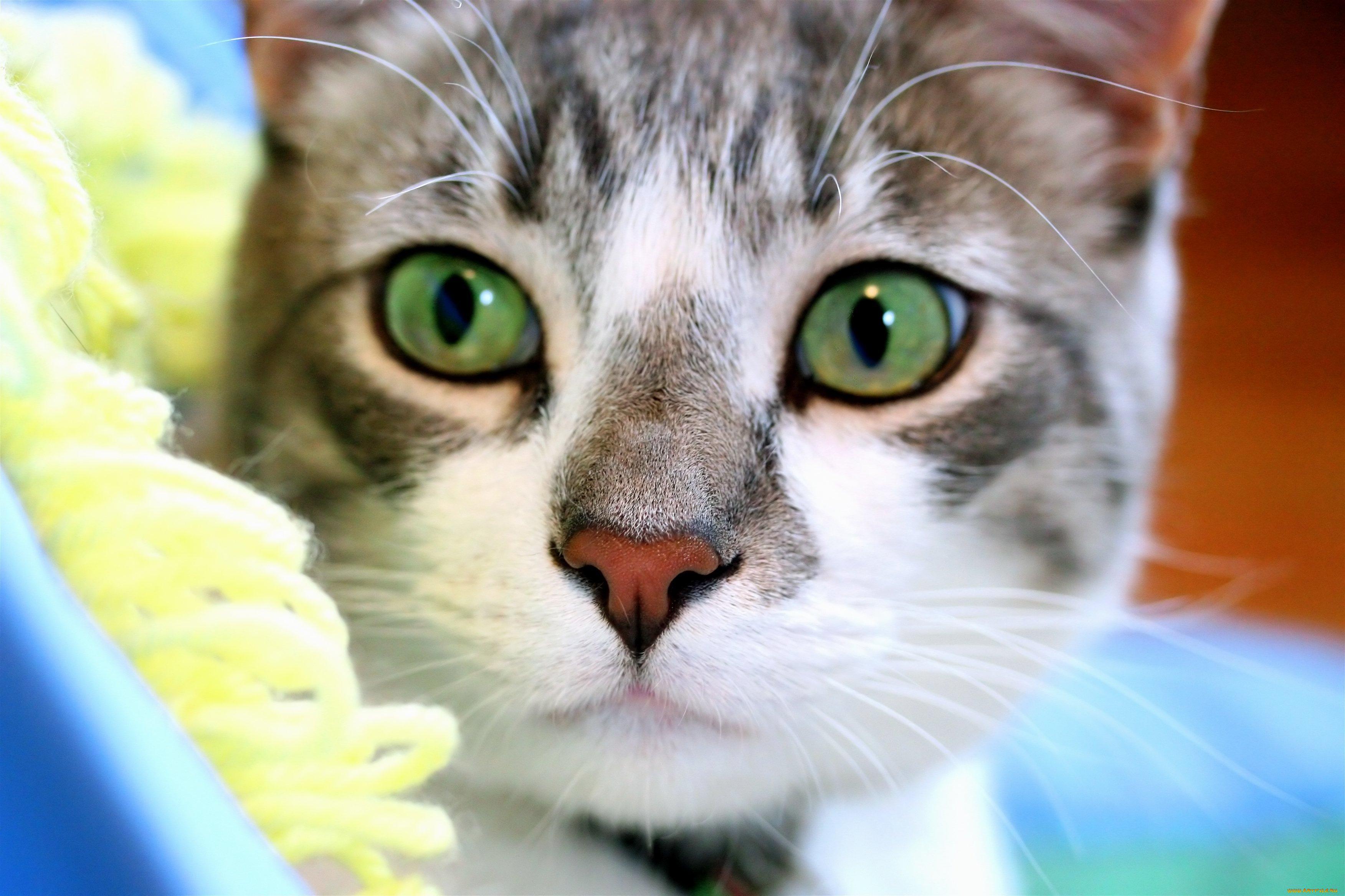 Кошка зеленые глаза загрузить