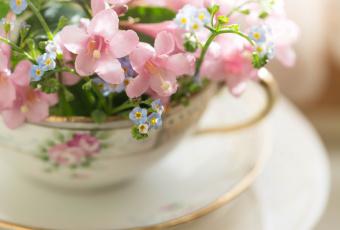 обоя цветы, букеты,  композиции, нежность, чашка, макро, розовый, блюдце