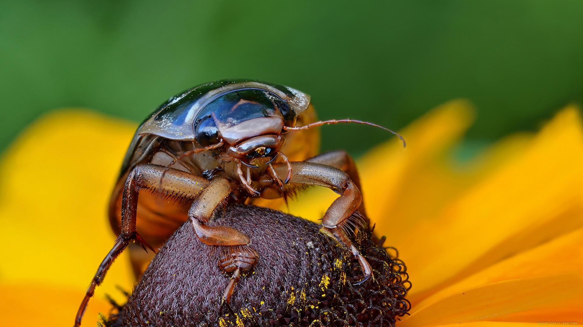 природа макро насекомое жук скачать