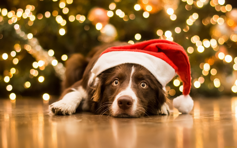 Открытка поздравлением, картинки на новый год животные