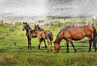 обоя животные, лошади, природа, пейзаж, красота, алтай