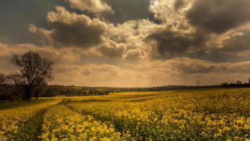 Картинка природа поля поле тучи дерево колея цветы