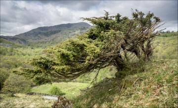Деревья на склоне горы скачать
