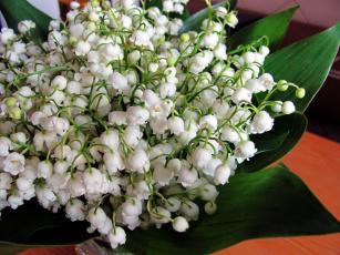 Картинка цветы ландыши майский