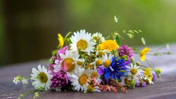 обоя цветы, букеты,  композиции, полевые, ромашки, васильки, букет