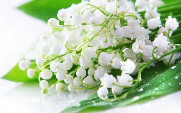 обоя цветы, ландыши, капли, букет, листья