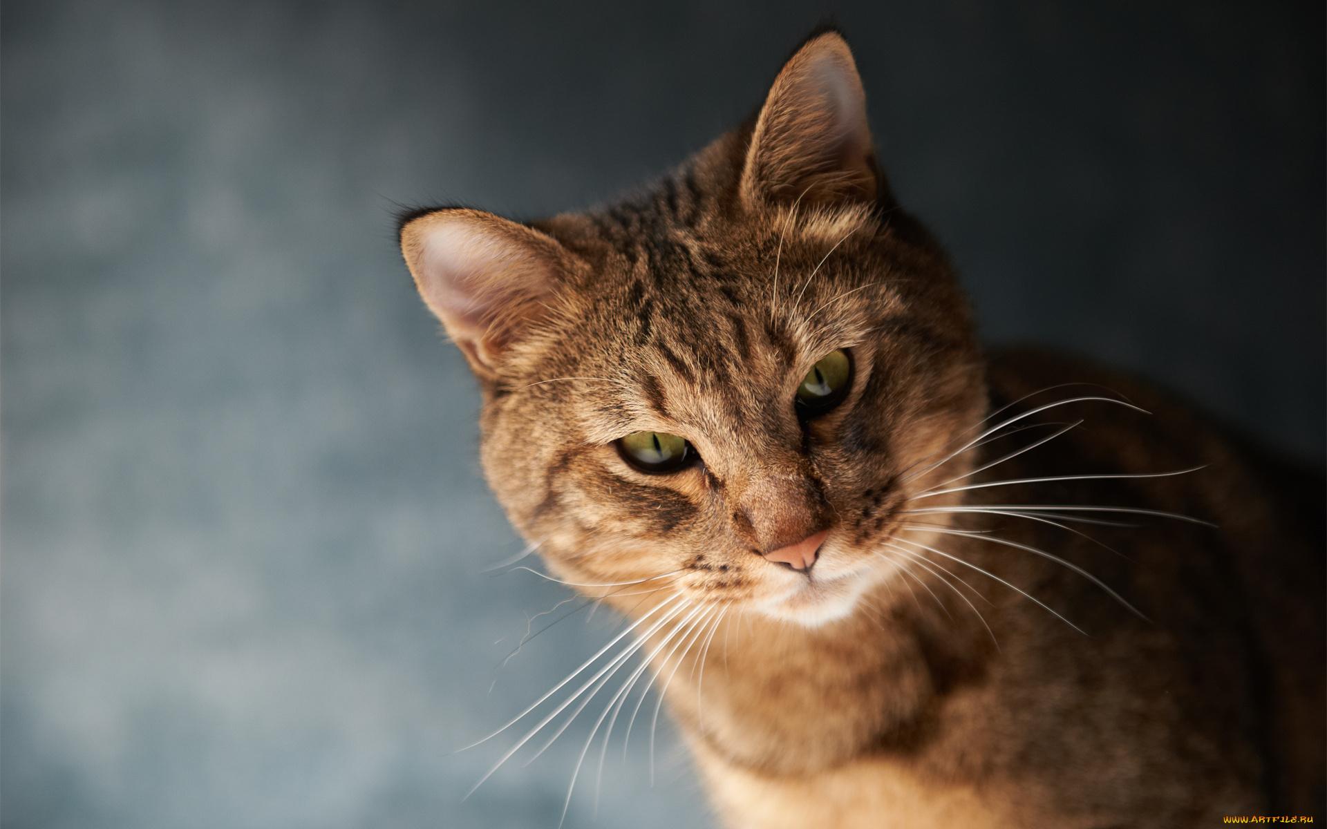 кошка домик усы без смс