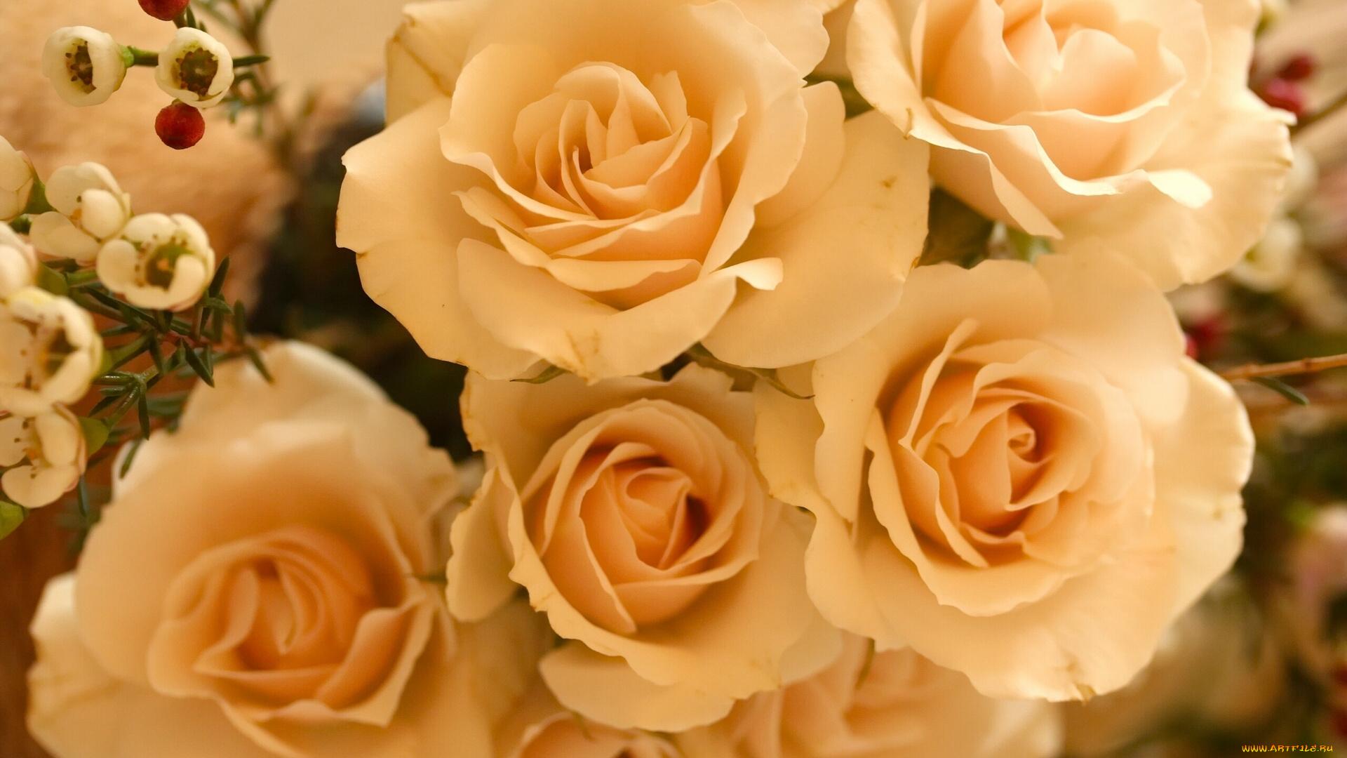 бежевые розы обои на рабочий стол № 51779 загрузить