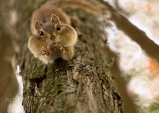 Картинка животные бурундуки лапки бурундук дерево