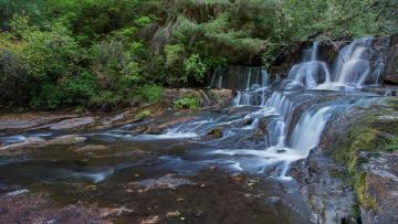 Картинка природа водопады лес водопад скалы деревья