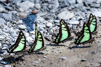 Картинка животные бабочки крылья колония