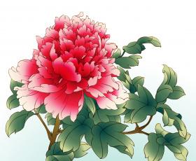 Картинка рисованные цветы пион