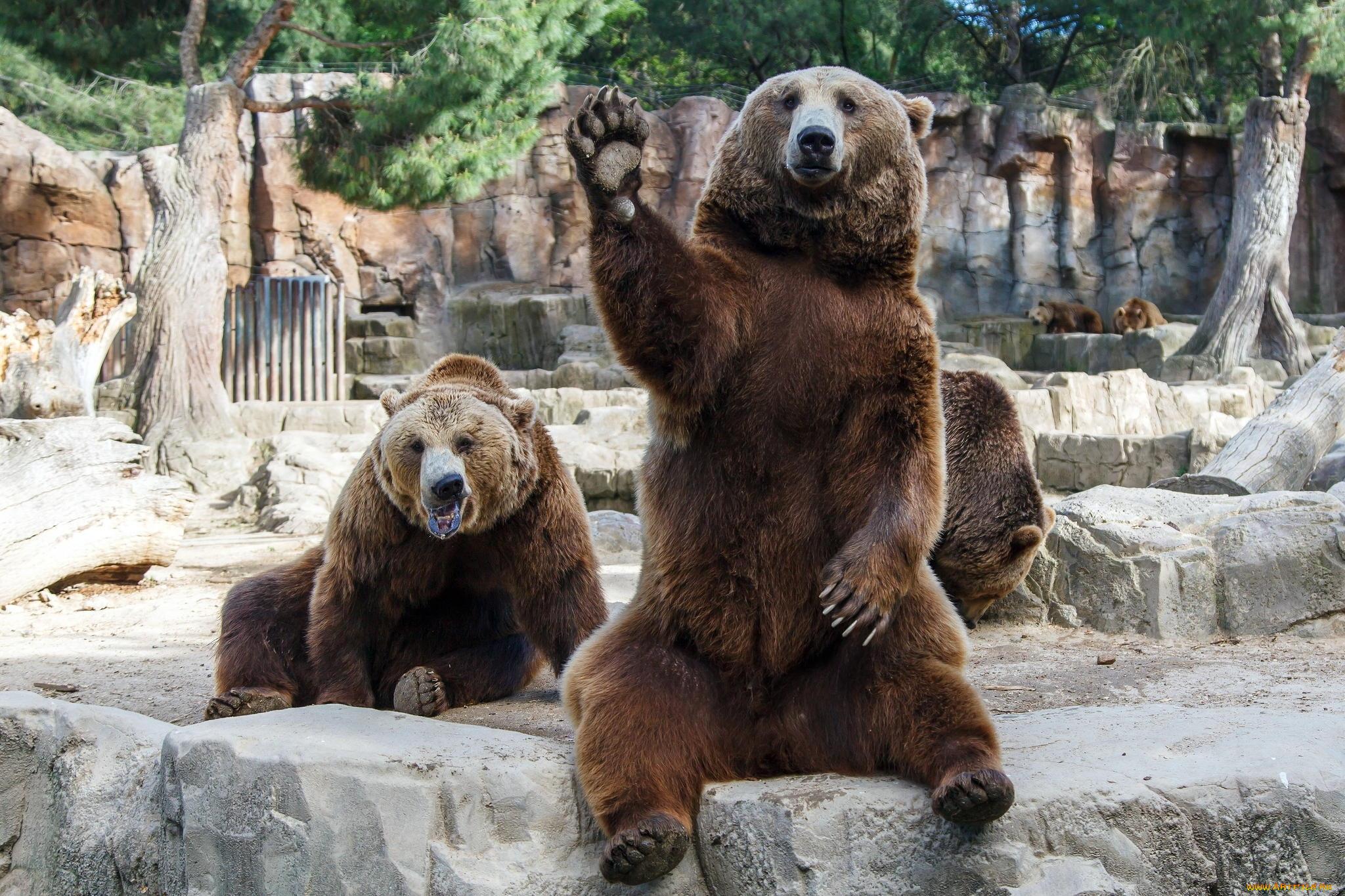 Кирой, прикольные картинки про зоопарк