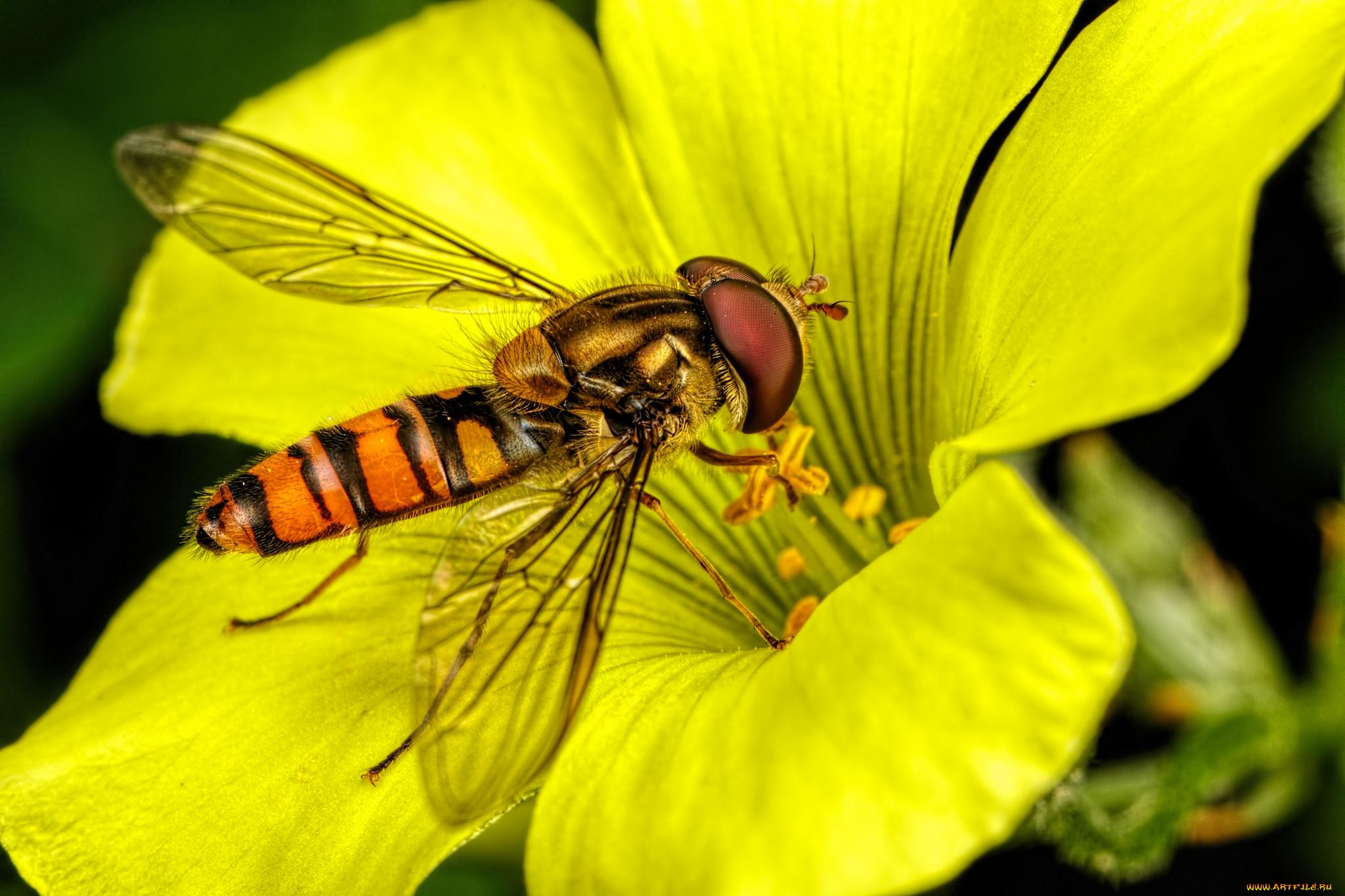 Фото насекомых на цветах