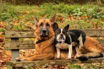 Картинка животные собаки друзья