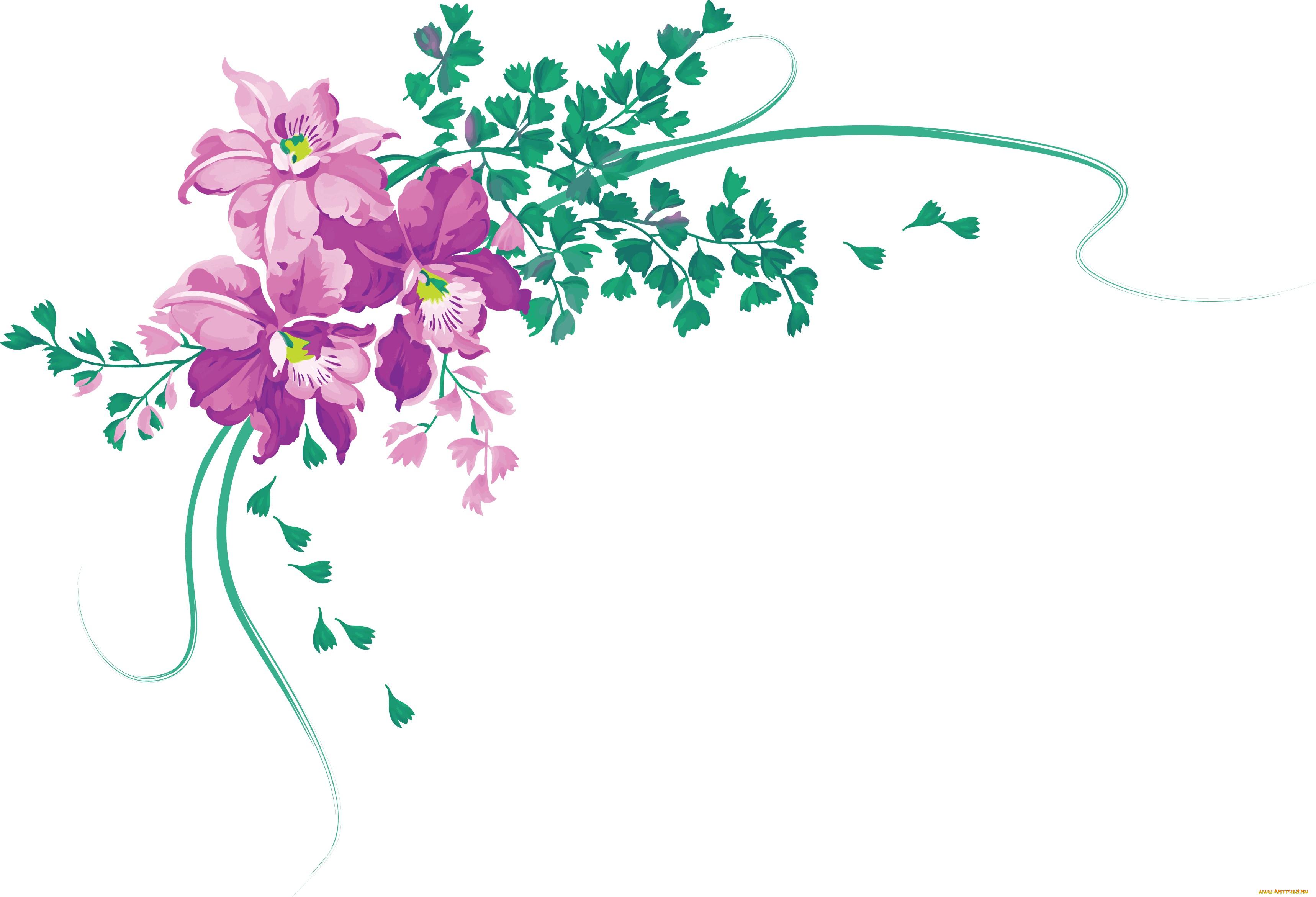 Цветы оформления открыток, картинках
