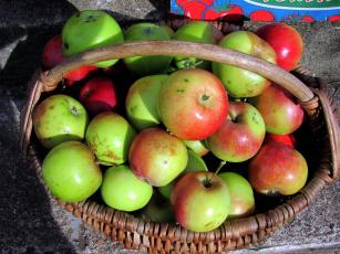 обоя еда, Яблоки, корзинка, урожай