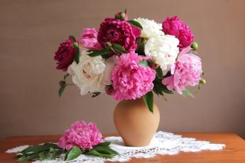 обоя цветы, пионы, разноцветный, букет