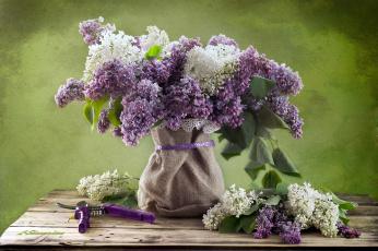 обоя цветы, сирень, весна, букет, ножницы