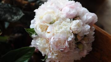 обоя цветы, пионы, нежность