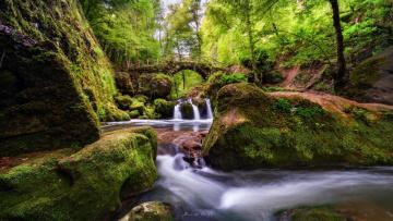 Картинка природа реки озера лес мох ручей мост деревья