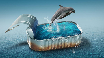 обоя юмор и приколы, дельфины, вода, банка