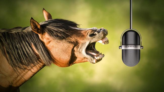 Обои картинки фото юмор и приколы, ржание, микрофон, лошадь