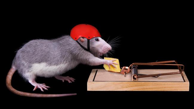 Обои картинки фото юмор и приколы, сыр, мышь
