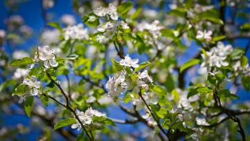 Картинка цветы цветущие деревья кустарники колоны взгляд цветение весна