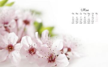 обоя календари, цветы, весна