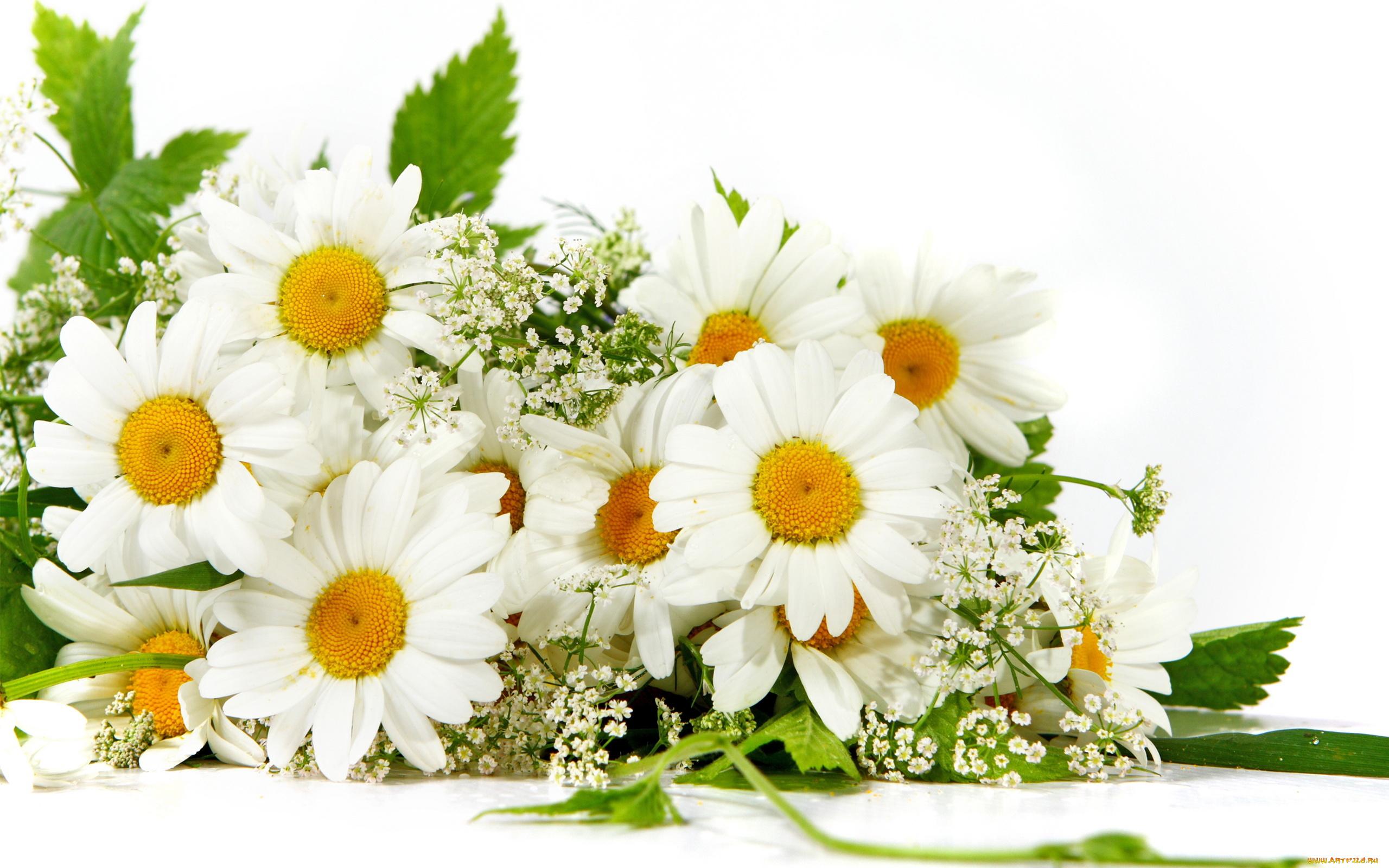 Цветы и пожелания картинки красивые