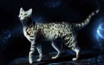 Картинка рисованные животные коты усы пятна довольный