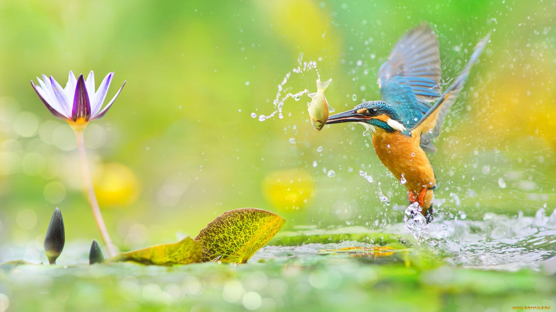 птица рыба брызги без регистрации