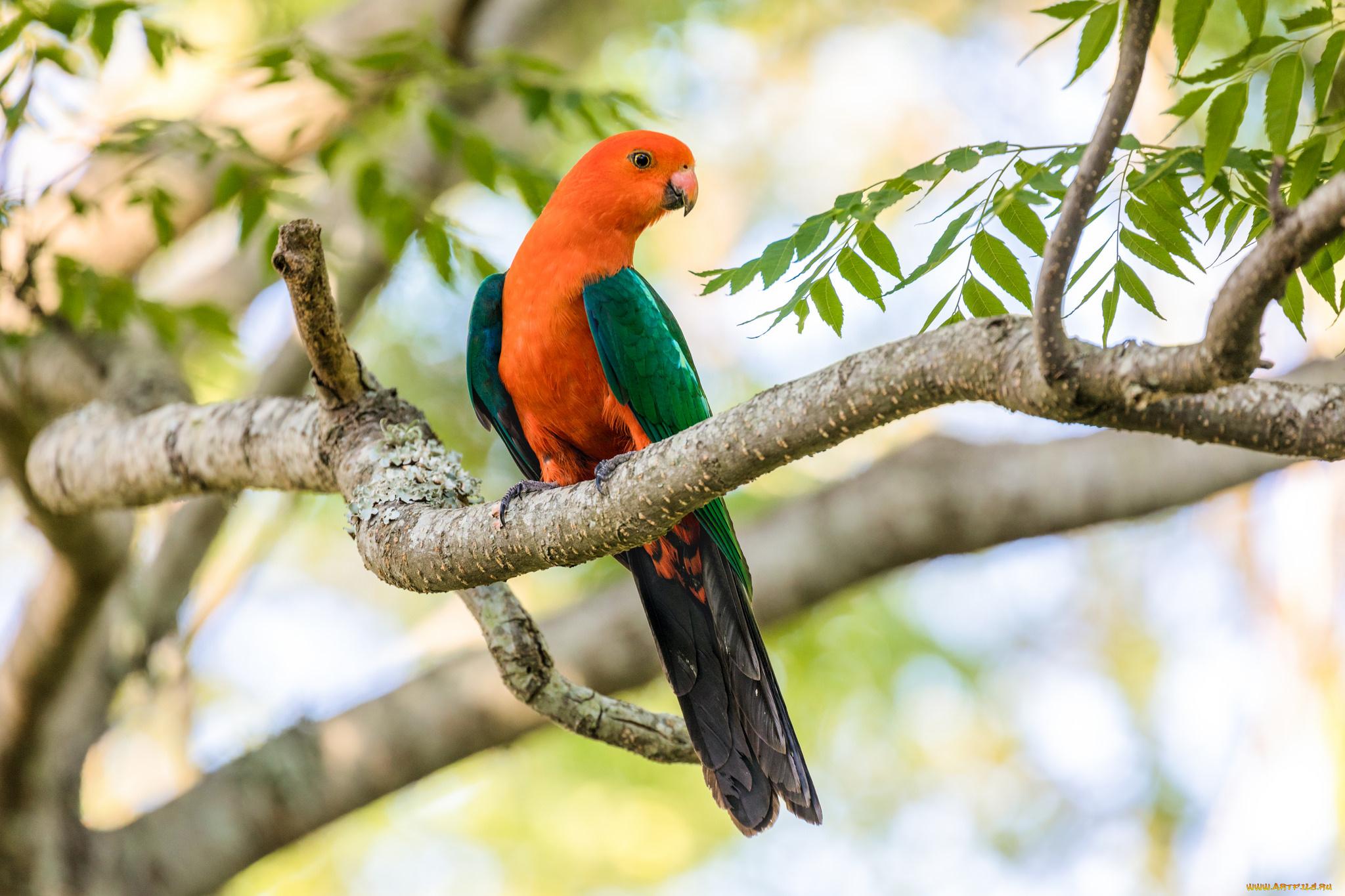 природа животные птицы попугаи  № 103530 бесплатно