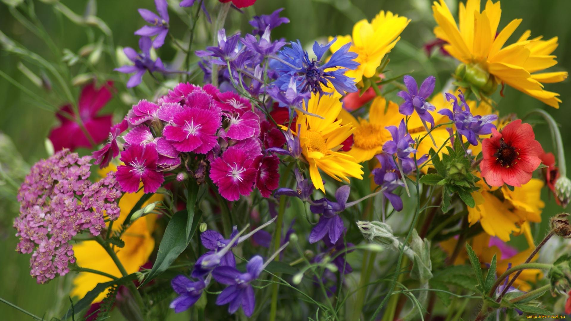 начале июня фото полевых цветов в хорошем качестве увидите, что