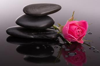 Картинка цветы розы бутоны камни роза капли