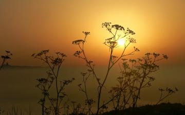 Картинка природа восходы закаты небо солнце закат растение силуэт горизонт
