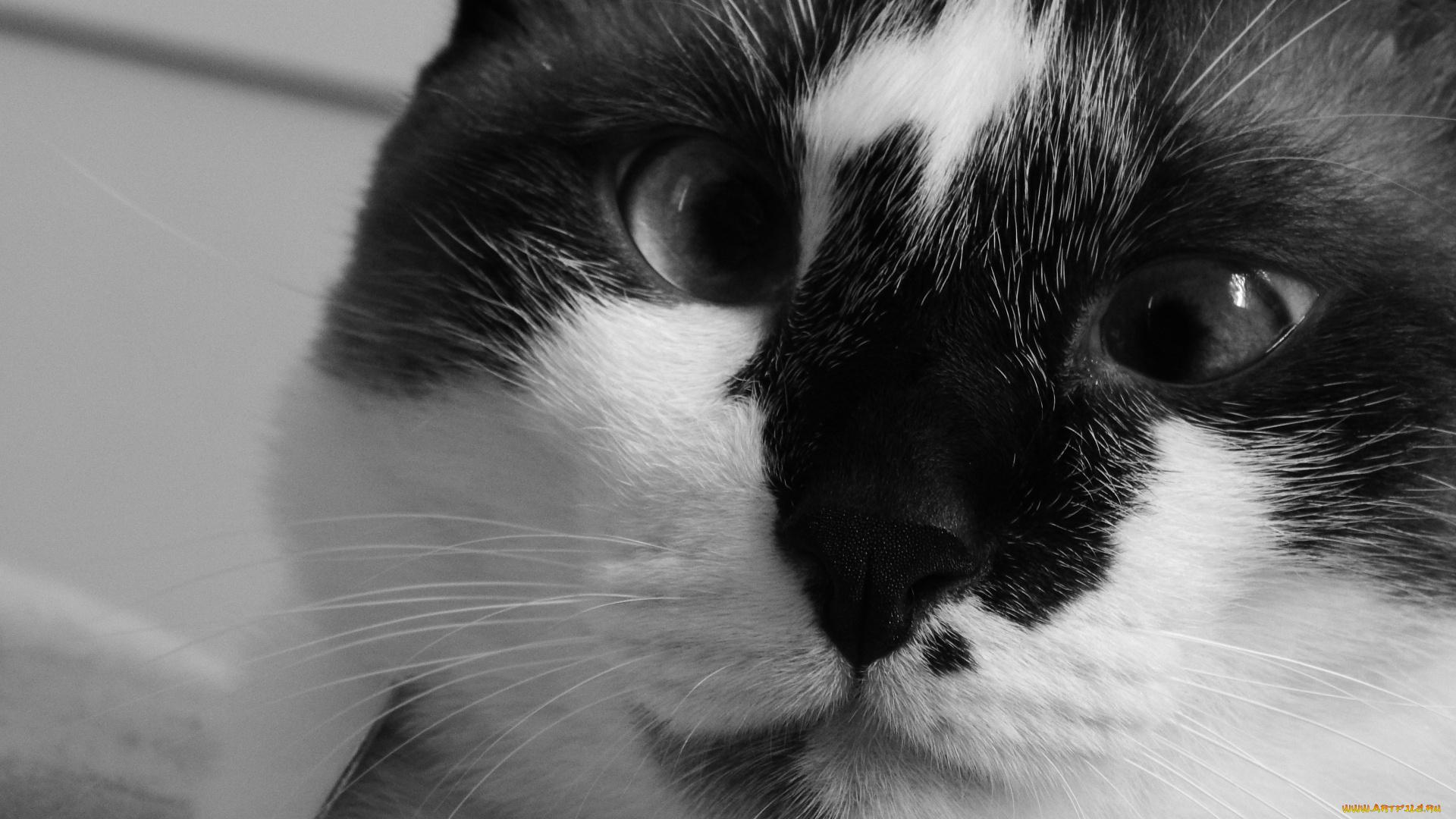 черно-белый кот мордочка усы онлайн